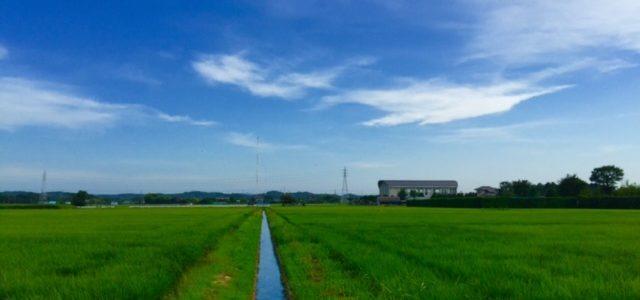 青、白、緑の世界
